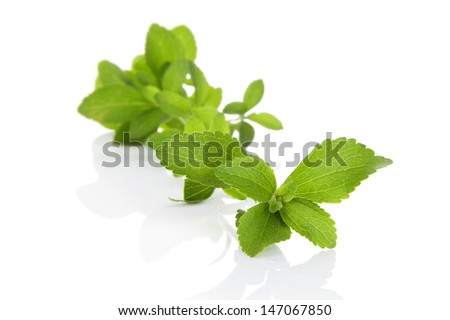 Fresh sweetleaf stevia herb isolated on white background with reflection and copy space. Culinary healthy cooking & eating. - stock photo