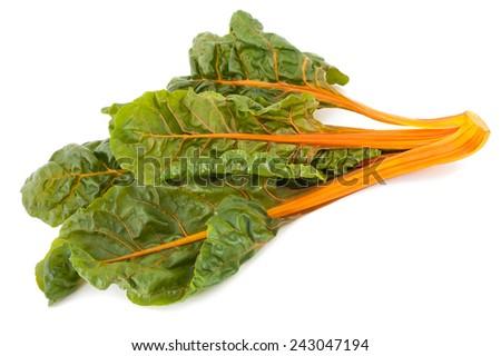 Fresh swiss chard isolated on white background - stock photo