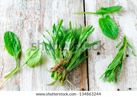 Fresh tarragon, spinach and spices. Selective focus - stock photo