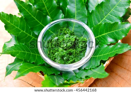 Fresh Thai herb mashed neem leaf on glass bowl with leaves on wooden background. - stock photo