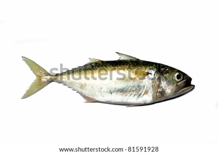 Fresh thai mackerel fish