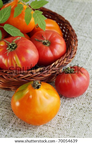 Fresh the harvest of tomatoes in the woven basket - stock photo