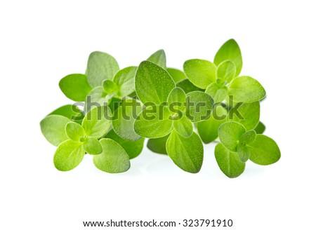 Fresh thyme - stock photo