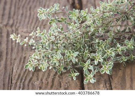 fresh thyme on wooden background - stock photo