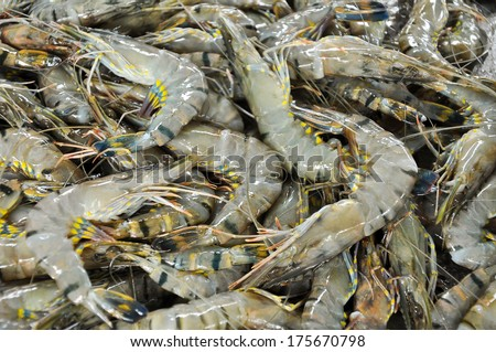 Fresh tiger prawn is on sale in the bazaar. - stock photo