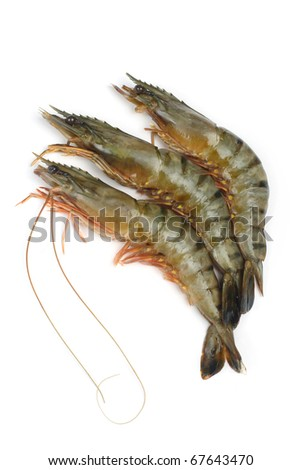 Fresh tiger shrimps on a white background