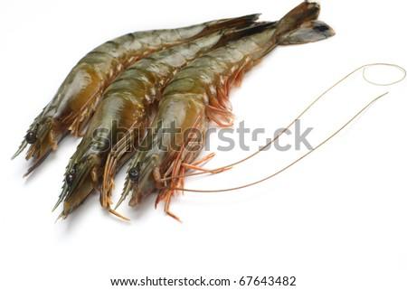 Fresh tiger shrimps on a white background - stock photo