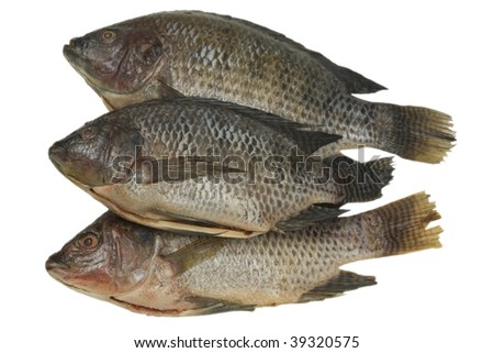 Fresh tilapia fish; isolated, clipping path included - stock photo