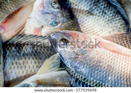 fresh tilapia fishes at the fish market, Thailand