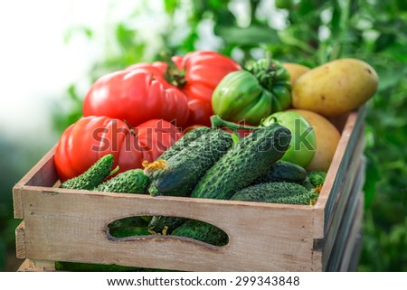 Fresh tomatoes and cucumbers in wooden box - stock photo