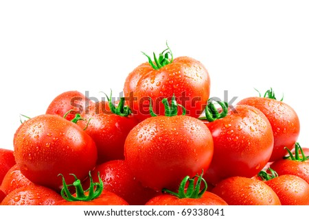 Fresh tomatoes with dew - stock photo