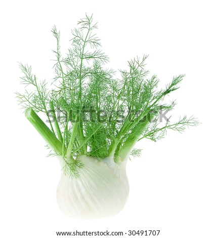 Fresh, trimmed fennel