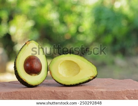 Fresh tropical avocado fruit - stock photo