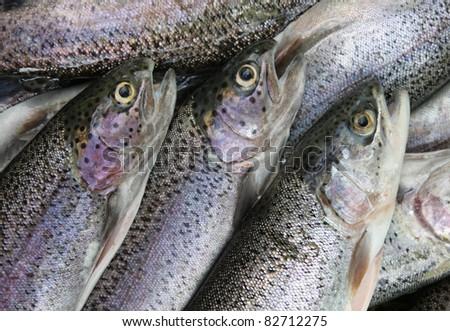 fresh trout - stock photo