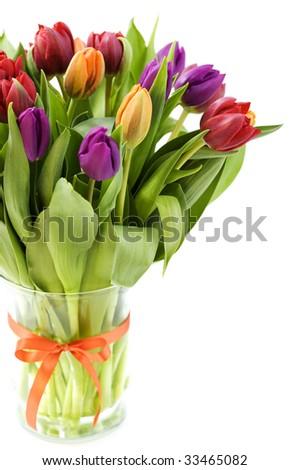 fresh tulips on white background - stock photo