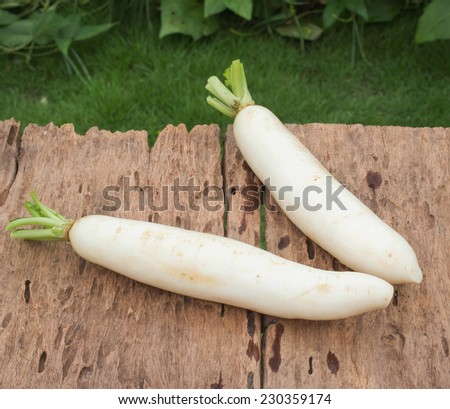 Fresh turnip and white radish on the wooden table in garden - stock photo