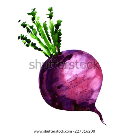 Fresh turnip isolated on white background - stock photo