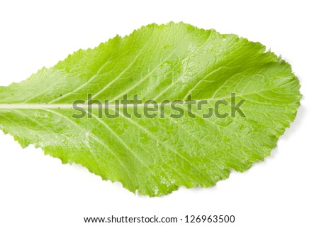 fresh turnip tops - stock photo