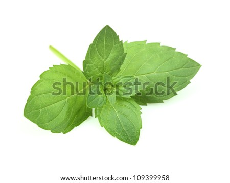 Fresh twig of mint