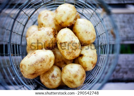 Fresh uncooked potatoes in wire basket - stock photo