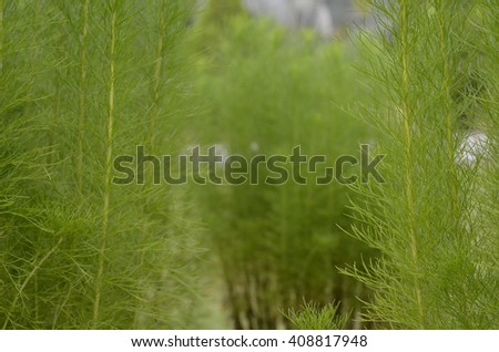 Fresh unknown green leaf ( soft focus ) - stock photo