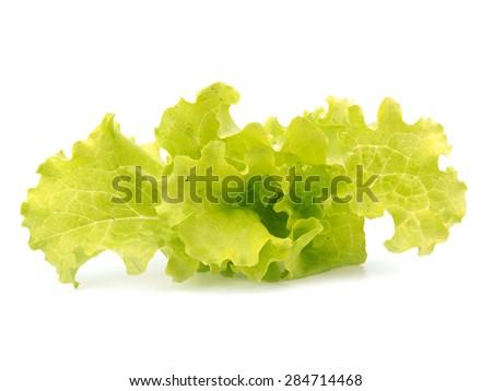 Fresh unwashed organic lettuce leaves on a white background     - stock photo
