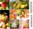 Fresh various apples closeup in situations - stock photo
