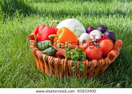 Fresh vegetable (cabbage, cucumber, bell pepper, onion, eggplant, carrot, tomato, mushroom, parsley)