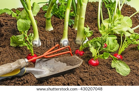 fresh vegetable in the garden - stock photo
