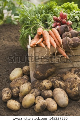 Fresh vegetables in crate - stock photo