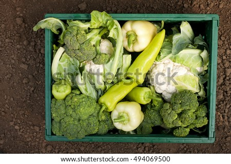 fresh vegetables in crates from the organic garden
