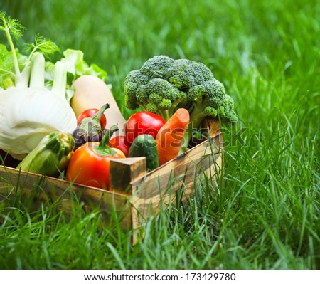 Fresh vegetables in the box on the green grass - stock photo