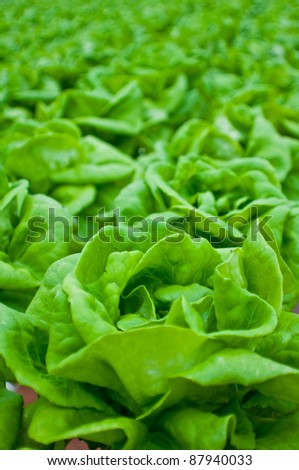 Fresh vegetables organic farm - stock photo
