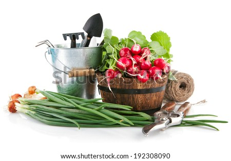Fresh vegetables with garden tools. Isolated on white background - stock photo