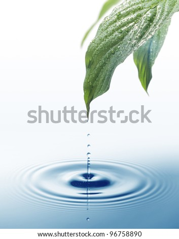 Fresh water dripping form green leaves - stock photo
