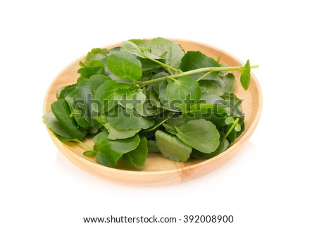 Fresh Watercress isolated on white background.