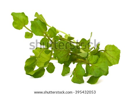 Fresh Watercress leaves isolated on white background