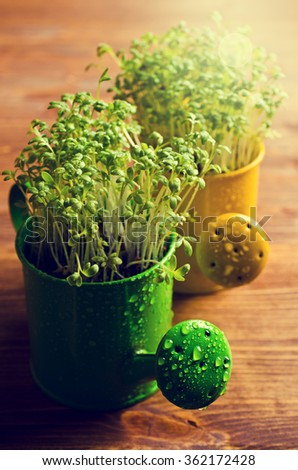 Fresh watercress sprouts with water droplets. Selective focus. - stock photo