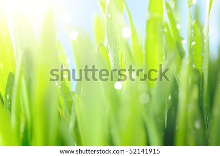 fresh wet grass in sun rays, closeup - stock photo