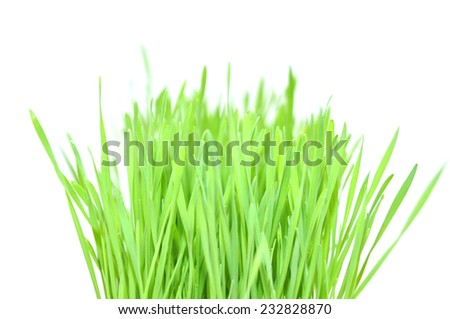 fresh wheatgrass on white background - stock photo