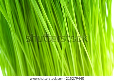 Fresh wheatgrass up close and in shallow depth of field to create an organic green background.  - stock photo
