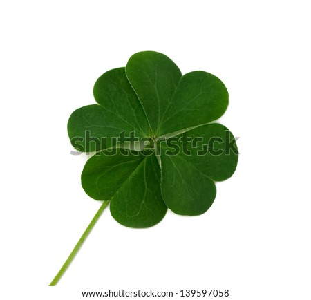 Fresh wild lucky clover isolated on white background - stock photo
