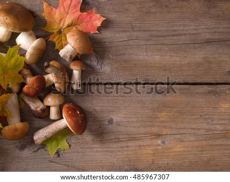 Fresh wild mushrooms on a wooden background