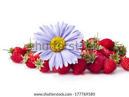 Fresh wild strawberries wiith blue aster flower isolated on white background  - stock photo