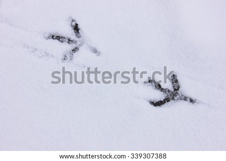 Fresh winter bird tracks in the snow