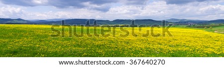 Fresh yellow flowered meadow in the hills - stock photo