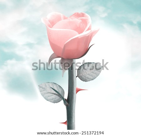 fresh yellow rose in vintage blue sky, clipping path and alpha channel included. - stock photo