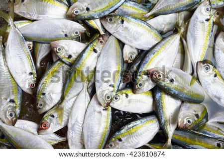 fresh yellow stripe trevally fishes background - stock photo