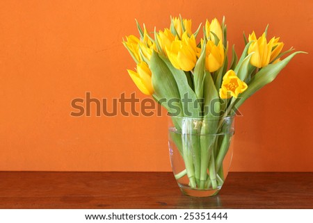Fresh yellow tulips blossoming in a glass vase in front of warm earthy colored wall - stock photo