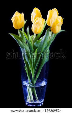 Fresh yellow tulips in glass isolated on black - stock photo
